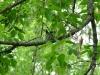 Humming Bird 1